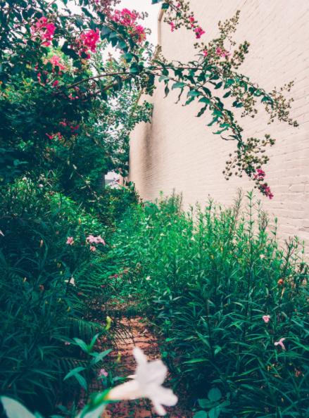 garden wall design